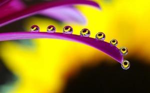 Flor y 6 gotas