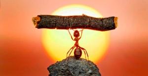 Hormiga levantando tronco